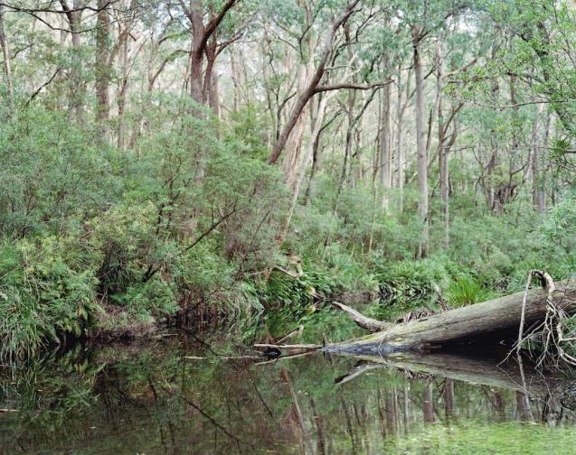 Mongarlowe River