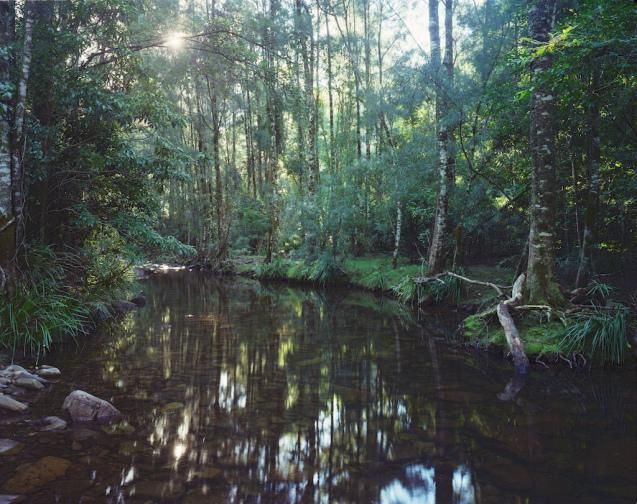In the wilderness - Buckenbowra River
