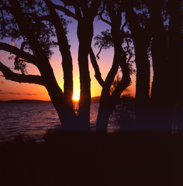 Sunset on paperbarks - Myall Lakes NP