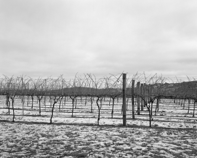 Bendooley vines