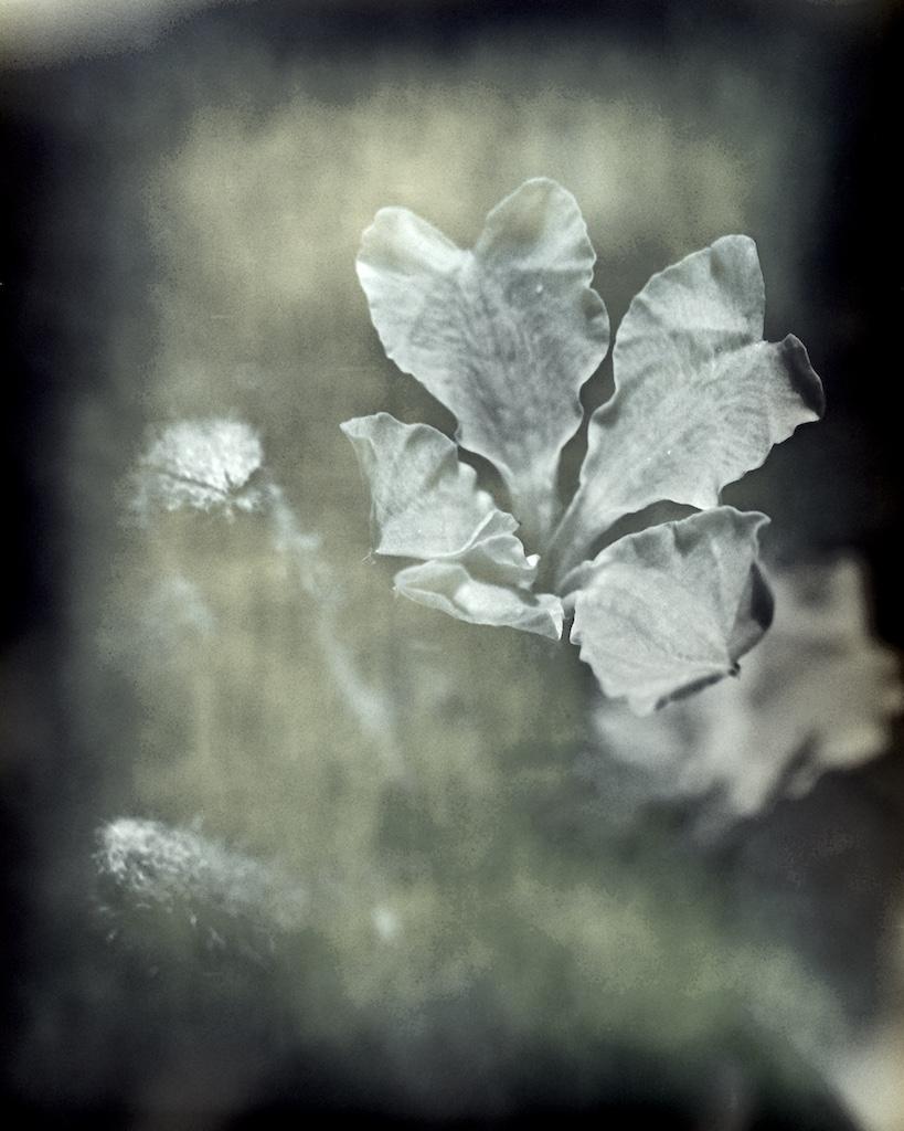 Petals and buds