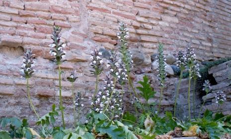 May 2017 Alhambra OM2 Portra800 16